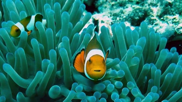 Unterwasserkamera Test Hero